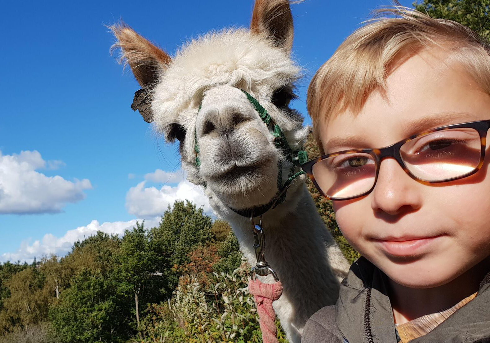 Alpaca trekking with Gordon the alpaca