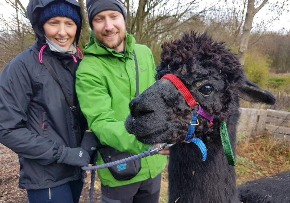 Alpaca trekking with Forest the Alpaca